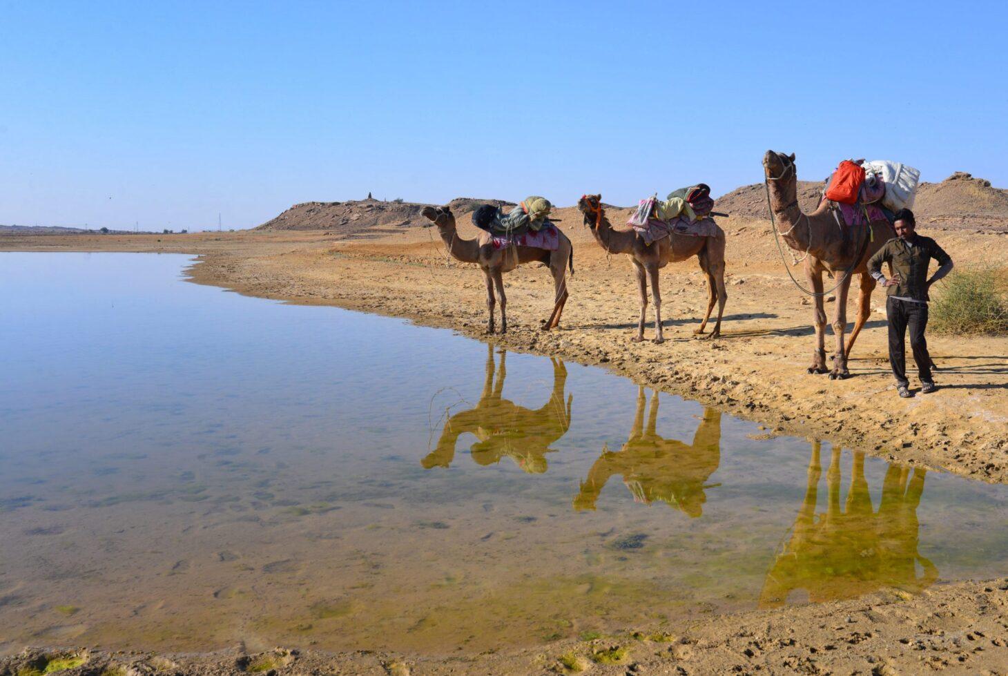 Camel Safari, Thar Desert